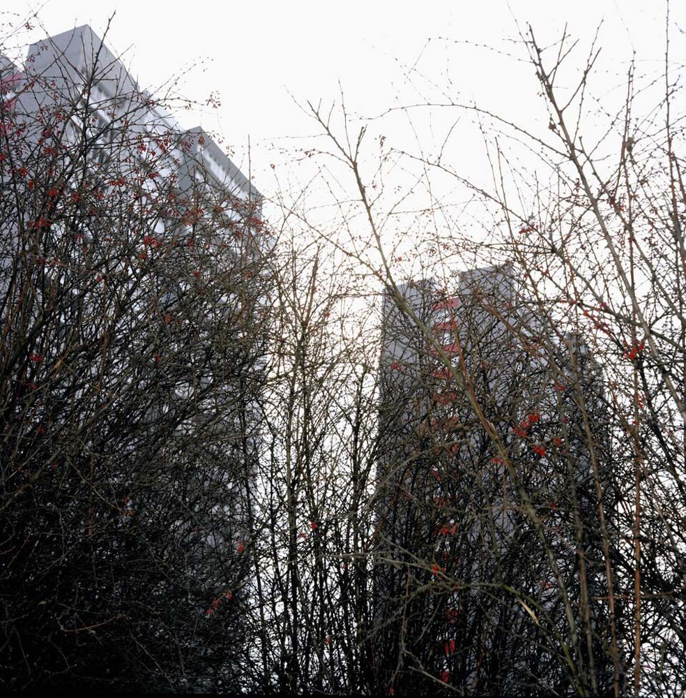 H Seawright, Undergrowth, Paris, 1997
